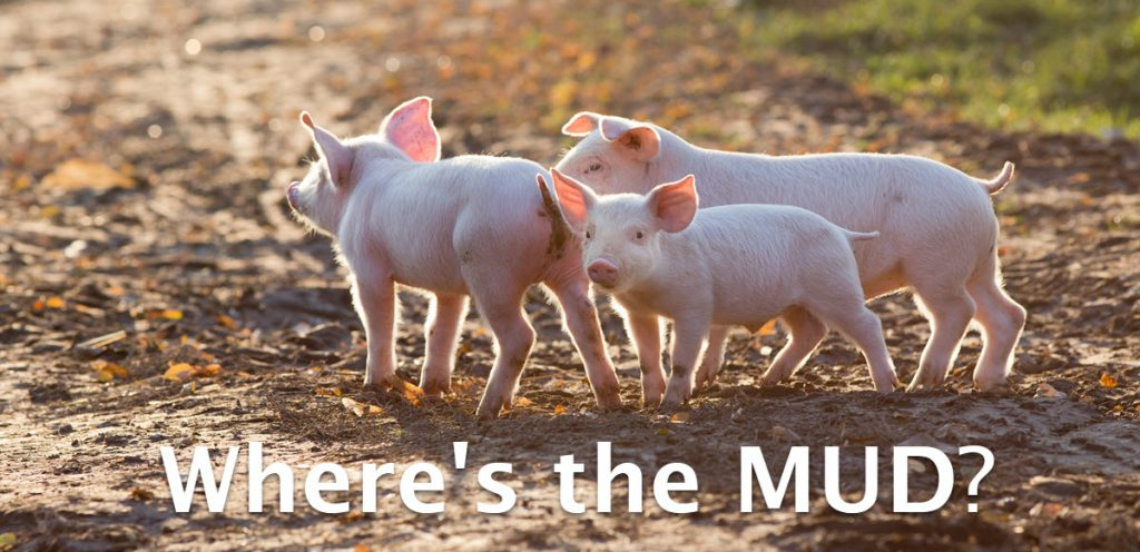 Why are pigs so happy when covered in mud and shit?